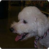 Adopt A Pet :: Charlie - Glastonbury, CT