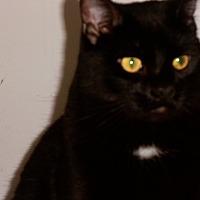 Adopt A Pet :: Hercules - Silver Lake, WI