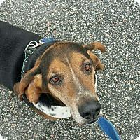 Adopt A Pet :: Downy - Columbia, SC