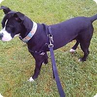 Adopt A Pet :: Gilly - Gig Harbor, WA