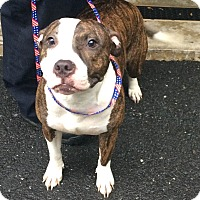 Adopt A Pet :: Lucy - Bloomfield, CT
