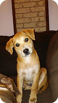 Labrador Retriever Mix Puppy for adoption in Ellaville, Georgia - Sassy (adoption pending)