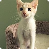 Adopt A Pet :: Bastian - Irvine, CA