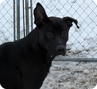 Shepherd (Unknown Type) Mix Dog for adoption in Grinnell, Iowa - Malcolm