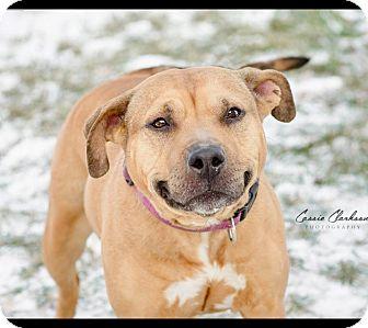 Terrier (Unknown Type, Medium) Mix Dog for adoption in Zanesville, Ohio - Eliza -ADOPTED!