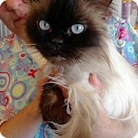Adopt A Pet :: Gucci - Port Jervis, NY