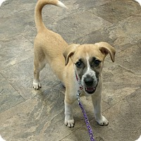 Adopt A Pet :: Cleopatra - Lakeland, FL