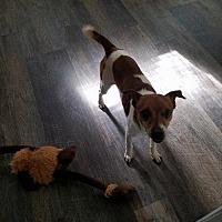 Adopt A Pet :: Bettis - Wilmington, DE