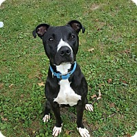 Adopt A Pet :: Rookie - Columbus, OH
