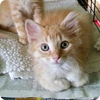 Adopt A Pet :: NJ - Milo - Blairstown, NJ