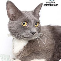 Adopt A Pet :: Lady Grey - Knoxville, TN
