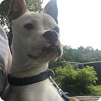 Adopt A Pet :: Suzie - Rockville, MD