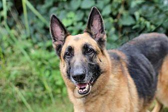 German Shepherd Dog Dog for adoption in Washington, D.C. - ZANTAR