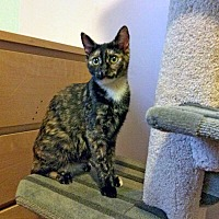 Adopt A Pet :: Nimue - Mississauga, Ontario, ON