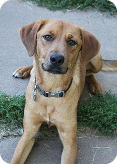 Labrador Retriever Mix Dog for adoption in Wichita, Kansas - Flint