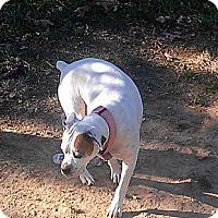 Adopt A Pet :: Piper - St. Robert, MO