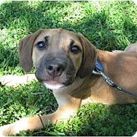 Adopt A Pet :: Quebec - Madison, WI