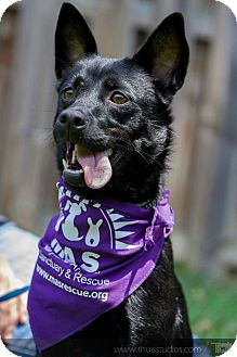 Manchester Terrier/Rat Terrier Mix Dog for adoption in Baltimore, Maryland - Fannie
