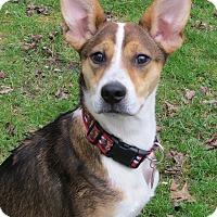 Adopt A Pet :: Kris Bryant- Illinois - Wood Dale, IL