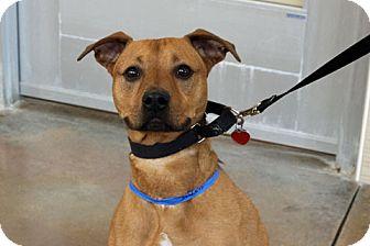 Shepherd (Unknown Type) Mix Dog for adoption in Chicago, Illinois - Hero