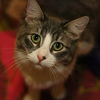 Adopt A Pet :: Clarice - Canoga Park, CA