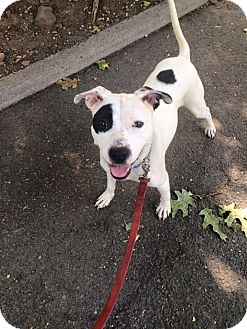 Terrier (Unknown Type, Medium) Mix Dog for adoption in Bloomfield, New Jersey - Rose