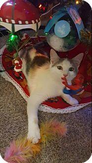 Domestic Shorthair Kitten for adoption in Carlisle, Pennsylvania - Loona
