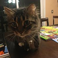 Adopt A Pet :: Bella (Courtesy Listing) - Hampton, VA