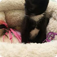 Adopt A Pet :: Elixir - Chelsea - Kalamazoo, MI
