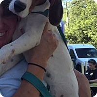 Adopt A Pet :: Goat - Glen St Mary, FL