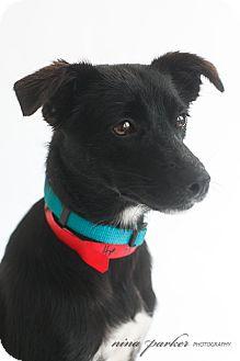 Terrier (Unknown Type, Small)/Spaniel (Unknown Type) Mix Dog for adoption in Marietta, Georgia - Minnie