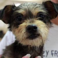 Adopt A Pet :: George - Waco, TX