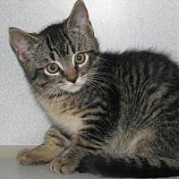 Adopt A Pet :: Andre - Ruidoso, NM