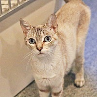 Adopt A Pet :: Raspberry - Lincoln, NE