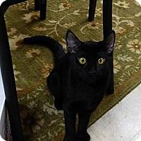 Adopt A Pet :: Black Pearl - Deerfield Beach, FL