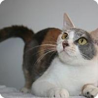Adopt A Pet :: Athena - Canoga Park, CA