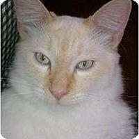 Adopt A Pet :: Fabio - Morgan Hill, CA