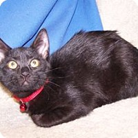 Adopt A Pet :: K-Twinkle2-Laurie - Colorado Springs, CO