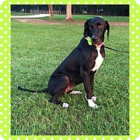 Adopt A Pet :: Cassie - killeen, TX