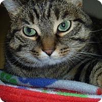 Adopt A Pet :: Tigress - Hamburg, NY