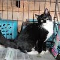 Adopt A Pet :: Luke - Stuart, VA