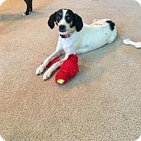 Adopt A Pet :: Jackie O - Manhattan, KS