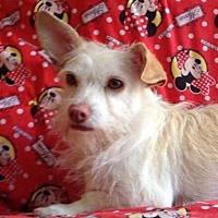 Adopt A Pet :: Sammy - Irvine, CA