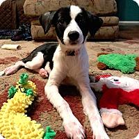 Adopt A Pet :: Molli - Westport, CT