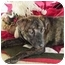 Photo 2 - American Staffordshire Terrier Mix Puppy for adoption in Gilbert, Arizona - Lucy