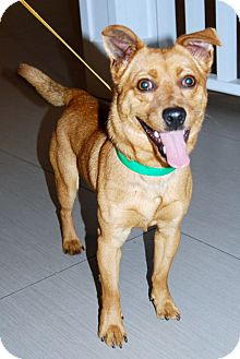 Spitz (Unknown Type, Small)/Terrier (Unknown Type, Small) Mix Dog for adoption in Los Angeles, California - Popeye
