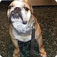 Adopt A Pet :: Max - Courtesy Post - Cincinnati, OH