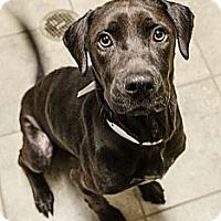 Adopt A Pet :: Isis - Cumming, GA