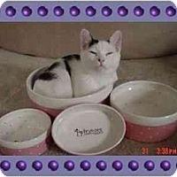 Adopt A Pet :: OREO - KANSAS, MO