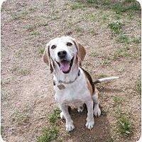 Adopt A Pet :: Scooter - Phoenix, AZ